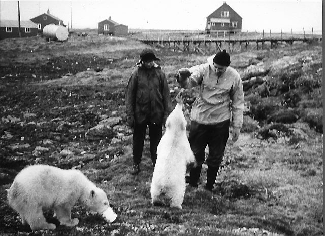 Isbjørnunger ved Bjørnøya Radio juli 1964. Foto: Dr. Stanislav Siedlecki/Norsk Polarinstitutt