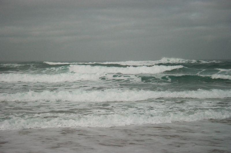 Bølgeskvulp. Foto: BOF