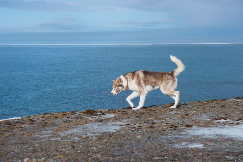 Laban ble også glad for at havisen viste seg på en solskinnsdag.