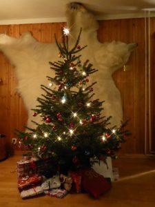 Bjørnøyens fineste jule tre