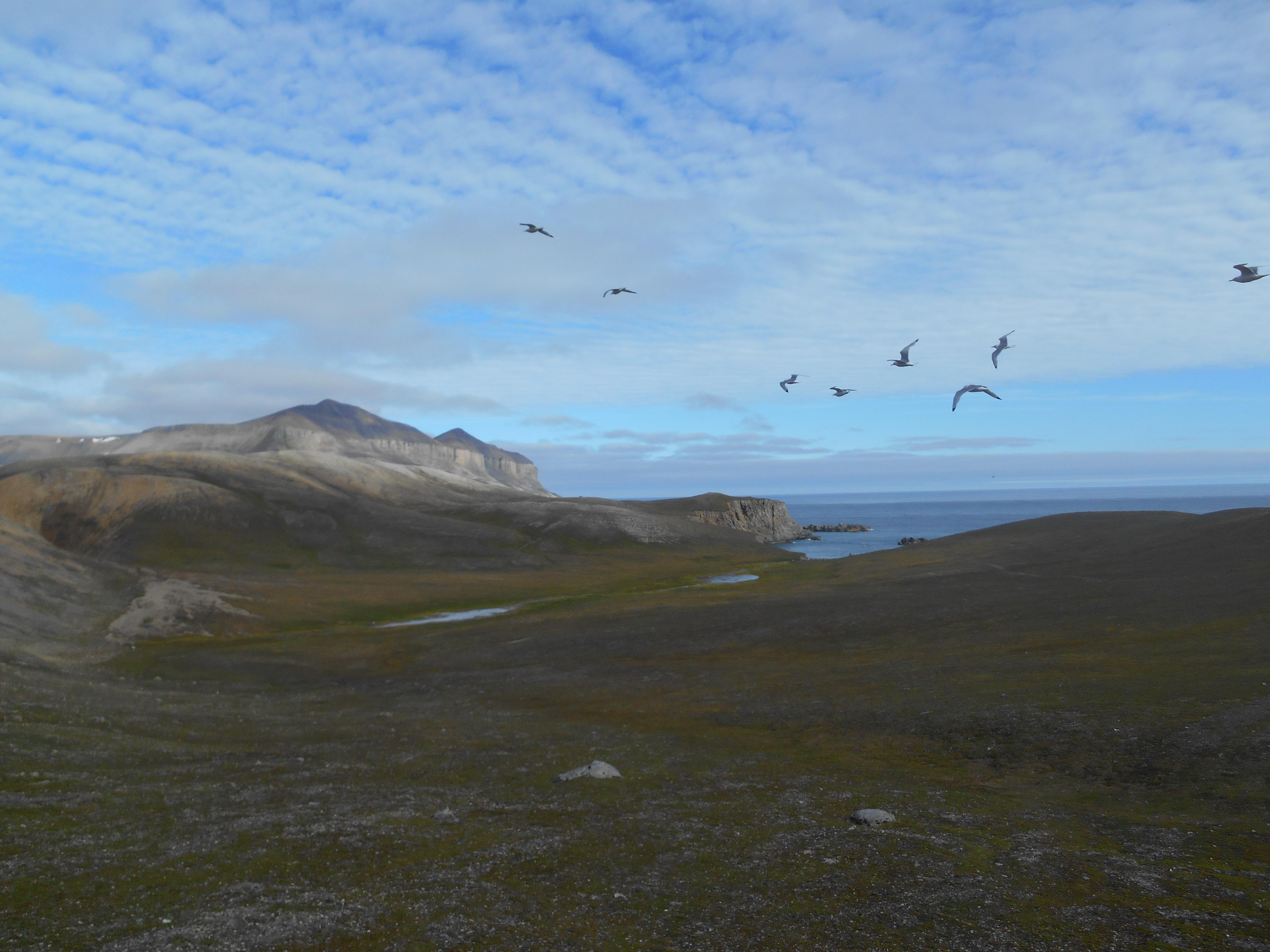 Utsikt mot Kvalrossbukta og Misery fjella