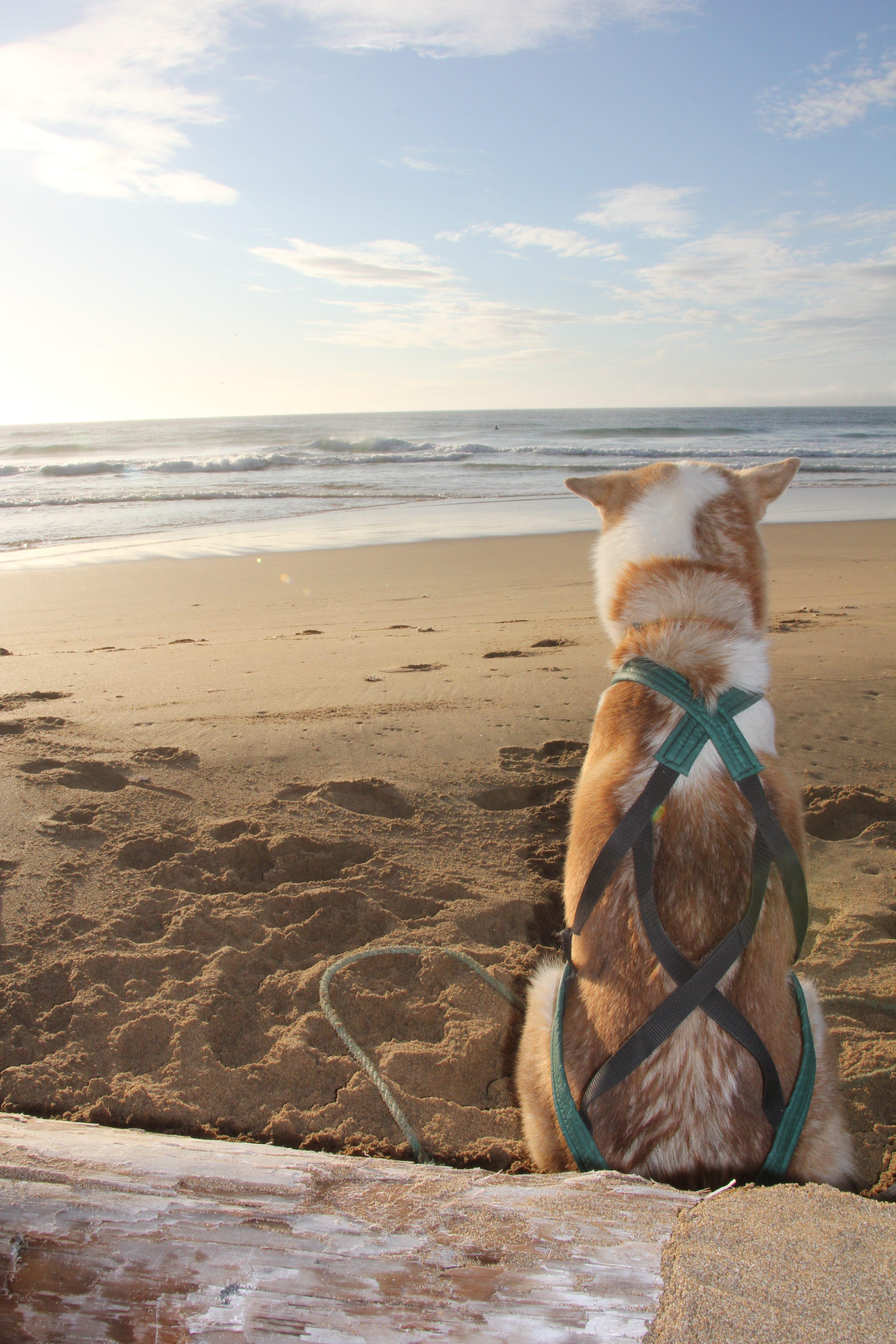 Laban sitter vakt under surfingen