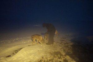 Hundene vil mer enn gjerne ha kos når en er ute på tur. Her er det Susanne som steller godt med hundene.